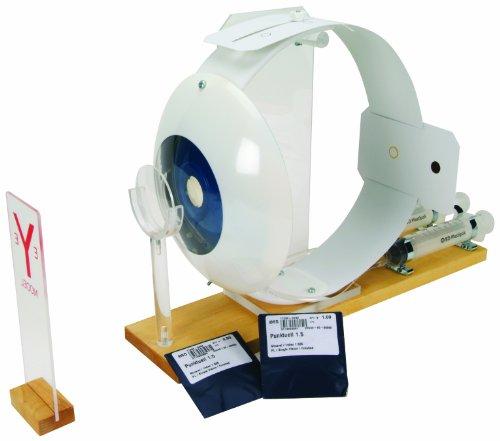 3B Scientific W16002 Functional Eye Model 177 Length x 118 Width