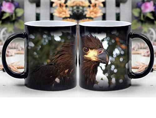 Amymami Personalized Gifts Heat Changing Magic Coffee Mug - Bald Eagle Immature Portrait Beak Head Wildlife
