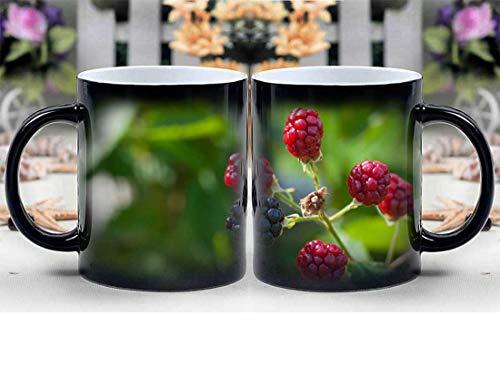 Amymami Personalized Gifts Heat Changing Magic Coffee Mug - Blackberries Ripe Immature Ripening Process