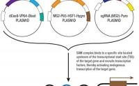NPW-CRISPR-Activation-Plasmid-m-27.jpg
