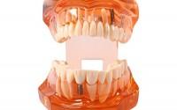 Removable-Teaching-Teeth-Model-Dental-Implant-Disease-Adult-Typodont-Demonstration-for-Dental-Teaching-Study-and-Tooth-Brushing-Hygiene-Education-21.jpg